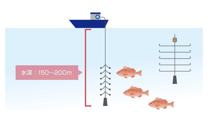 一本釣り漁業